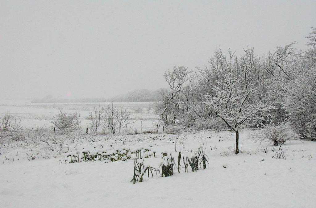Snedække i Tømmerby, december 2004. Foto: Jørgen Peter Kjeldsen/ornit.dk.