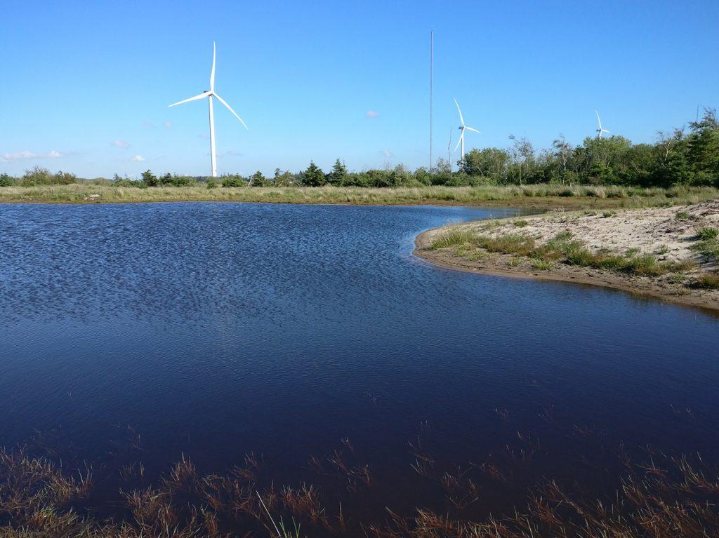 "Nyetableret sø i Blovsgårde, juni 2017. Foto: Jørgen Peter Kjeldsen/<a href=""http://ornit.dk/"">ornit.dk</a>."